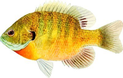 The_Golden_Fish_Award